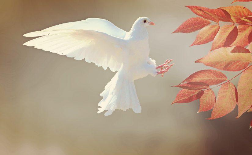 Sozialer Frieden